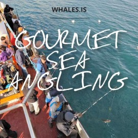 Gourmet Sea Angling Whale watching Hauganes in North Iceland