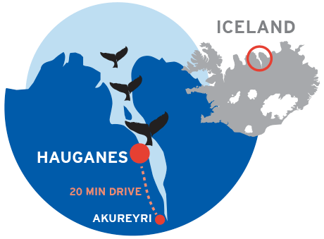 whales location map iceland akureyri hauganes