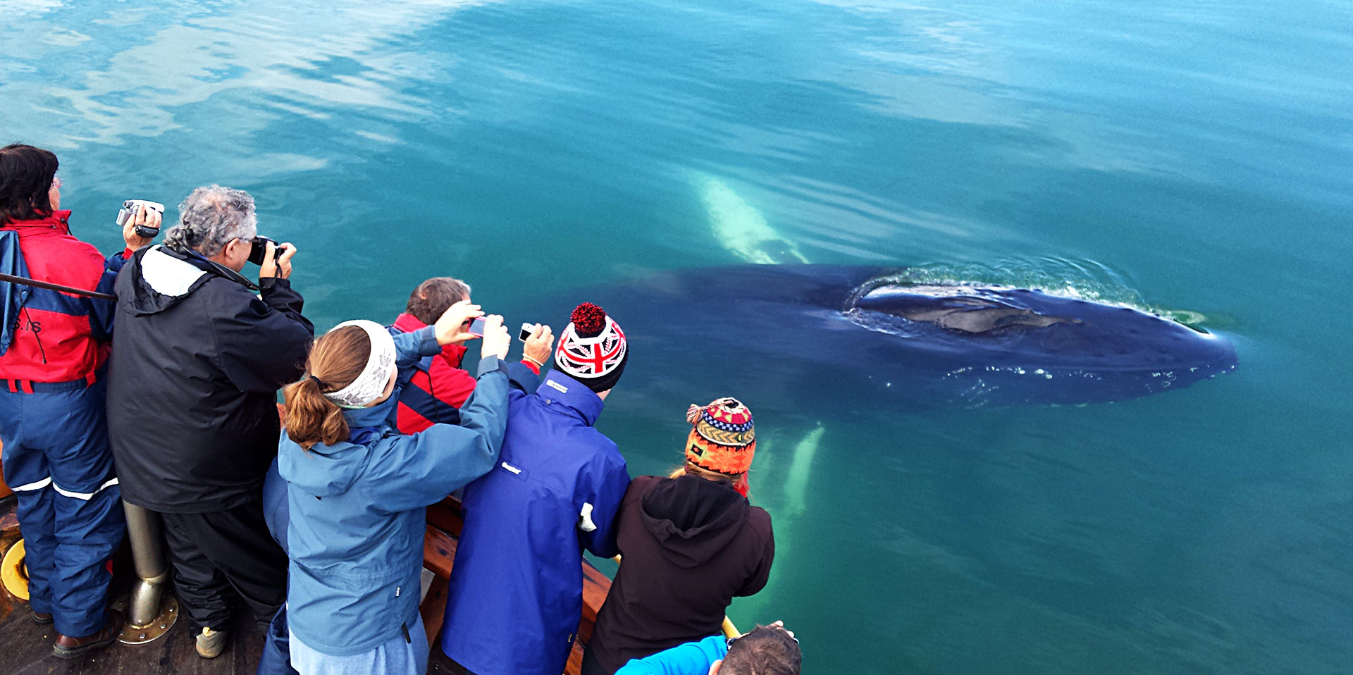 The perfect whale watching tour